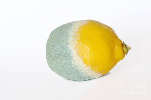 Food And Drink Print featuring the photograph Half Rotten Lemon by Sami Sarkis