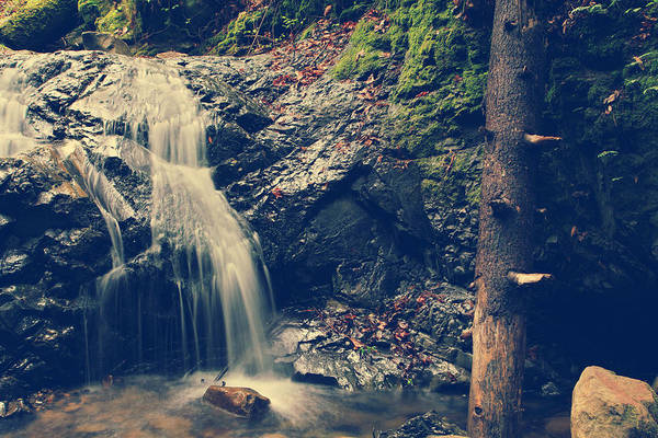 Uvas Canyon County Park Print featuring the photograph I'm Not Giving Up On You by Laurie Search