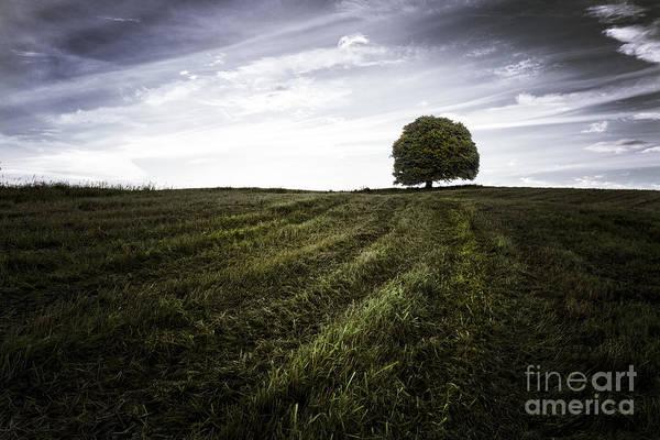 Big Sky Print featuring the photograph Lone Tree by John Farnan