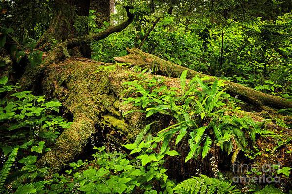 Rainforest Print featuring the photograph Lush Temperate Rainforest by Elena Elisseeva