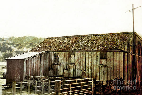 Old Shed Print featuring the photograph Mossy Shed by Linde Townsend