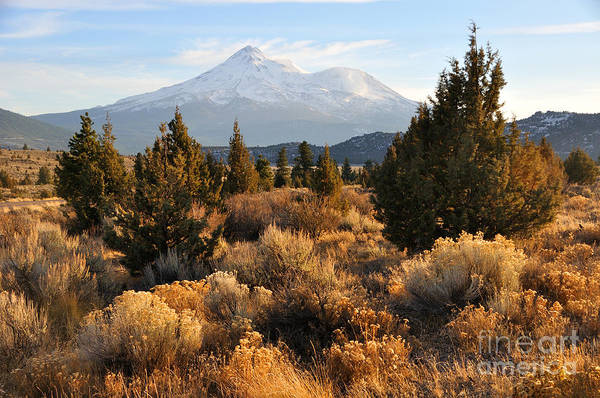 Mt Print featuring the photograph Mount Shasta In The Fall by Gary Whitton