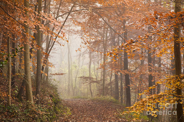 Atmospheric Print featuring the photograph Mystic Woods by Anne Gilbert