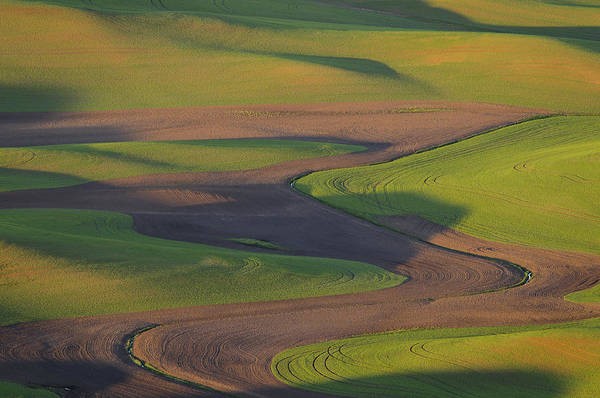 Palouse Print featuring the photograph Palouse Curves by Greg Vaughn