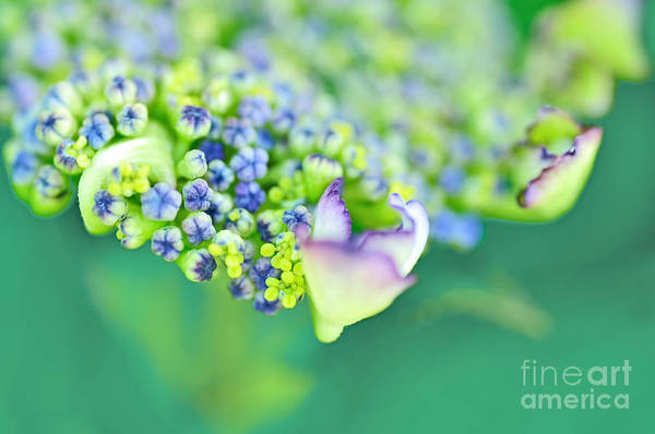 Photography Print featuring the photograph Pastel Buds by Kaye Menner
