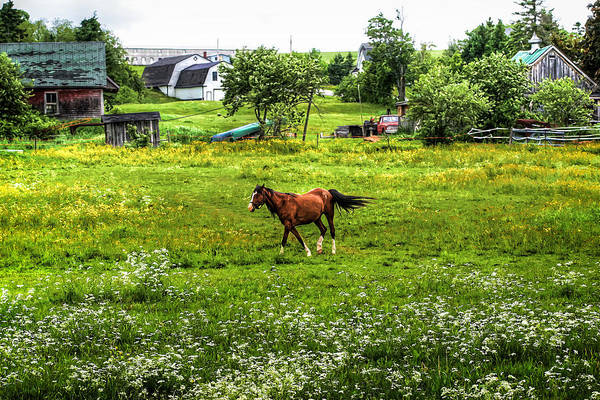 Horse Print featuring the photograph Running Free by Gary Smith