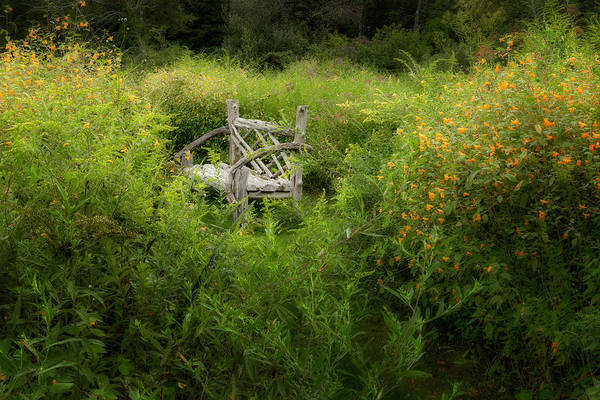 Bench Print featuring the photograph Seclusion by Bill Wakeley