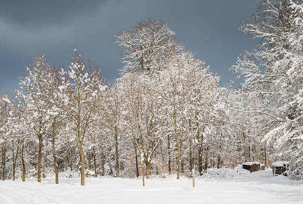 Winter Print featuring the photograph Snow Covered Trees In The Forest In Winter by Matthias Hauser