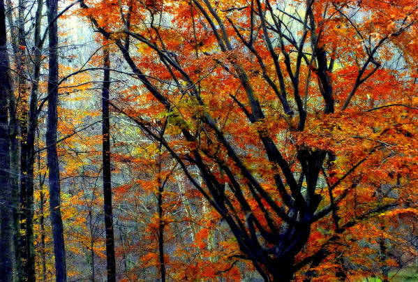 Autumn Print featuring the photograph Song Of Autumn by Karen Wiles
