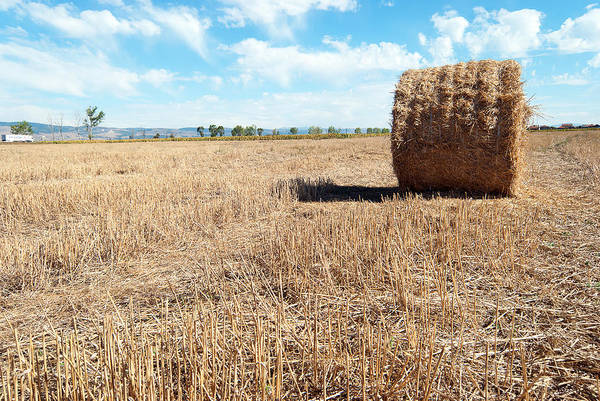 Agriculture Print featuring the photograph Straw Bales At A Stubbel Field by Svetoslav Radkov