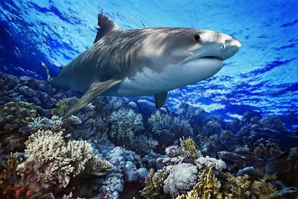 Tiger Shark Print featuring the digital art Tiger Shark Galeocerdo Cuvier by Owen Bell