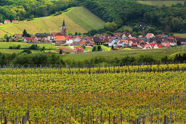 Vineyards Print featuring the photograph View Of Rodern From The Vineyards Of Alsace by Greg Matchick