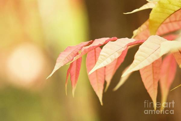 Leaves Print featuring the photograph Whisper by Andrew Brooks