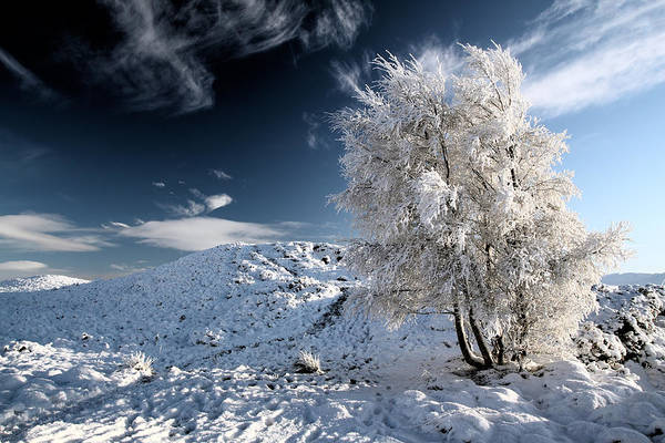 Snow Scene Print featuring the photograph Winter Landscape by Grant Glendinning