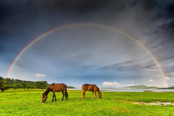 Bulgaria Print featuring the photograph Rainbow Horses by Evgeni Dinev