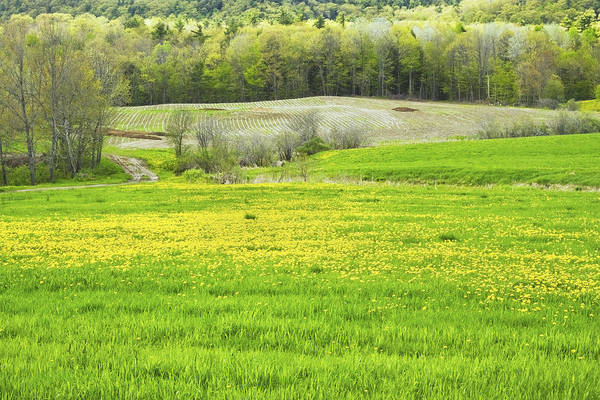 Maine Farmland Print featuring the photograph Spring Farm Landscape With Dandelion Bloom In Maine by Keith Webber Jr