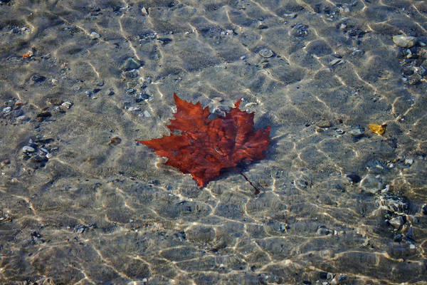 Abstract Print featuring the photograph Under Water by Joana Kruse