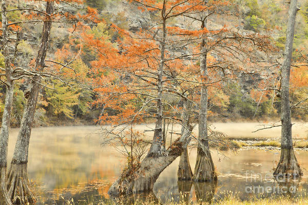 Landscape Print featuring the photograph Cypress Trees In The Mist by Iris Greenwell
