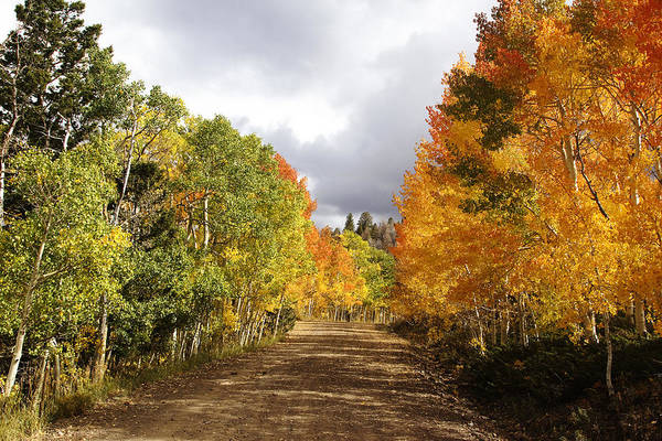 Autumn Photographs Print featuring the photograph Rocky Mountain Fall by Mark Smith