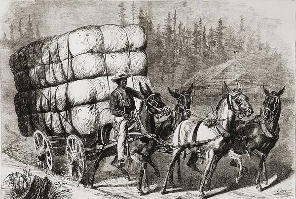 History Print featuring the photograph African American Teamster Transporting by Everett