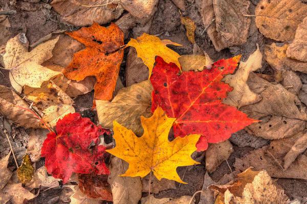 Autumn Print featuring the photograph Autumn Leaves by Matt Dobson