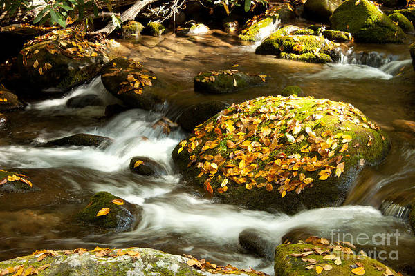 Autumn Print featuring the photograph Autumn Stream by Lena Auxier