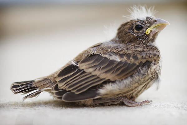Baby Bird Print featuring the photograph Baby Bird 1 by Jessica Velasco