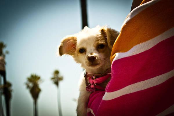 Dog Print featuring the photograph Beach Dog by Steven Baker