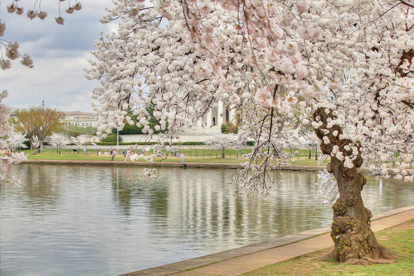 Metro Print featuring the digital art Digital Liquid - Cherry Blossoms Washington Dc 6 by Metro DC Photography