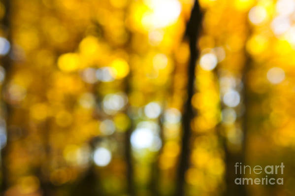 Nature Print featuring the photograph Fall Forest In Sunshine by Elena Elisseeva