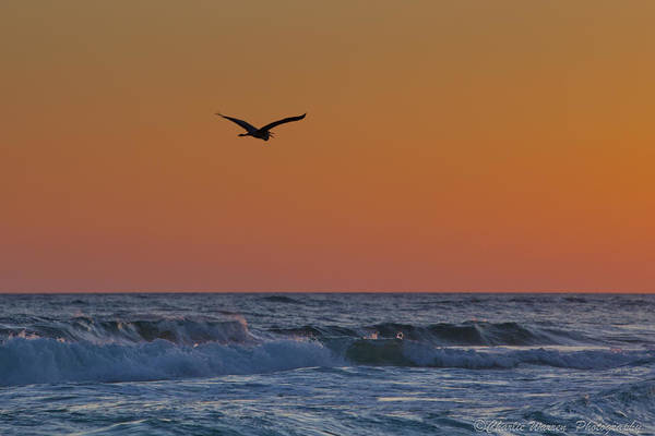 Beach Print featuring the photograph Fly By by Charles Warren