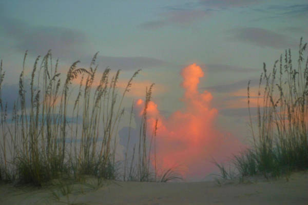 Sea Oats Print featuring the photograph Foggy Oats by Kristin Elmquist