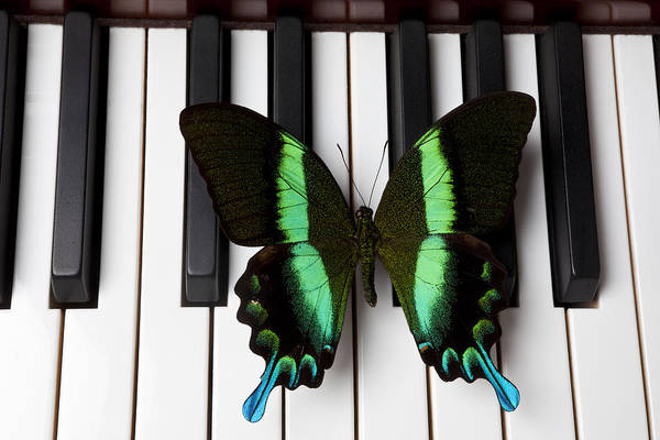 Green Print featuring the photograph Green And Black Butterfly On Piano Keys by Garry Gay