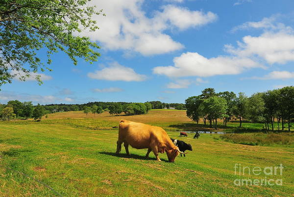 Farms Print featuring the photograph Green Pasture by Catherine Reusch Daley