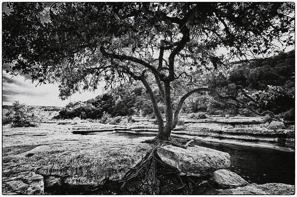 Still Life Print featuring the photograph Grown Into The Rock by Lisa Spencer