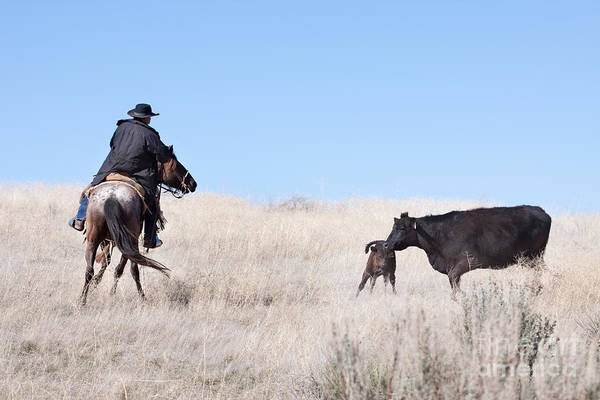 Cowboy Print featuring the photograph Head 'em Up by Cindy Singleton