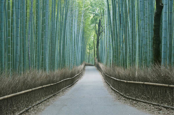 Photography Print featuring the photograph Japan Kyoto Arashiyama Sagano Bamboo by Rob Tilley