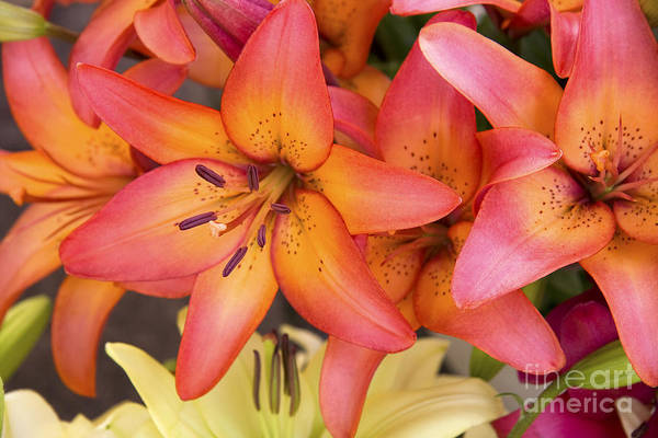 Aroma Print featuring the photograph Lilies Background by Jane Rix