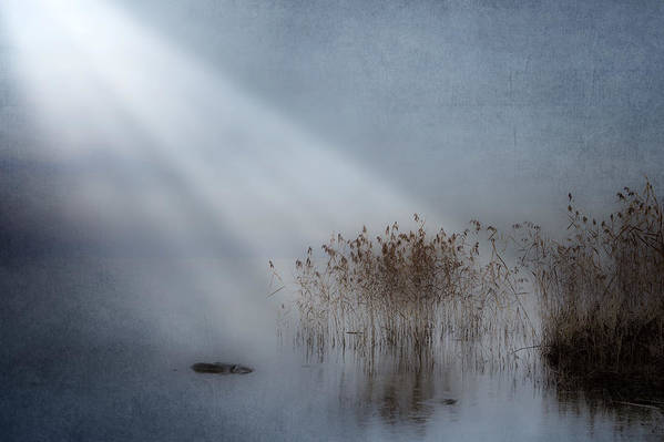 Reeds Print featuring the photograph Rays Of Light by Joana Kruse