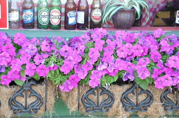 Floral Print featuring the photograph Seven Bottles Of Beer On The Wall by Jan Amiss Photography