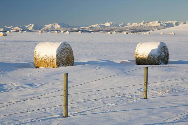 Alberta Print featuring the photograph Snow Covered Hay Bales In A Snow by Michael Interisano