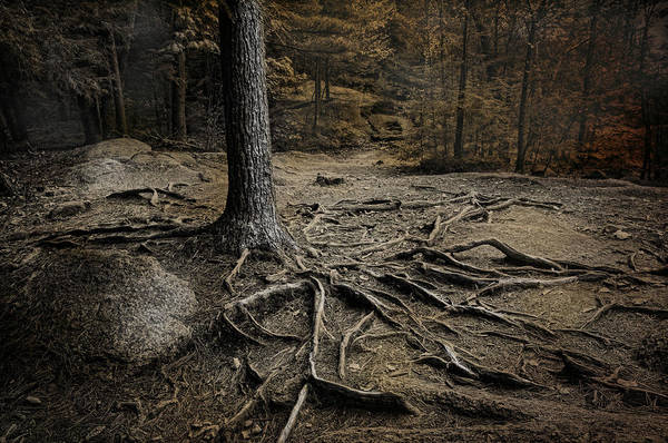Roots Print featuring the photograph Soul Searching by Robin-lee Vieira