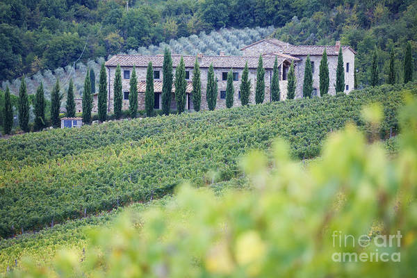 Agriculture Print featuring the photograph Stone Farmhouse And Vineyard by Jeremy Woodhouse