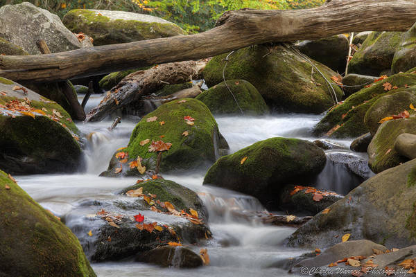 Stream Print featuring the photograph Stream Of Thought by Charles Warren