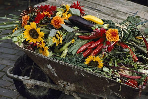 Europe Print featuring the photograph Sunflowers, Dahlias, Eggplants, Pepper by Jonathan Blair
