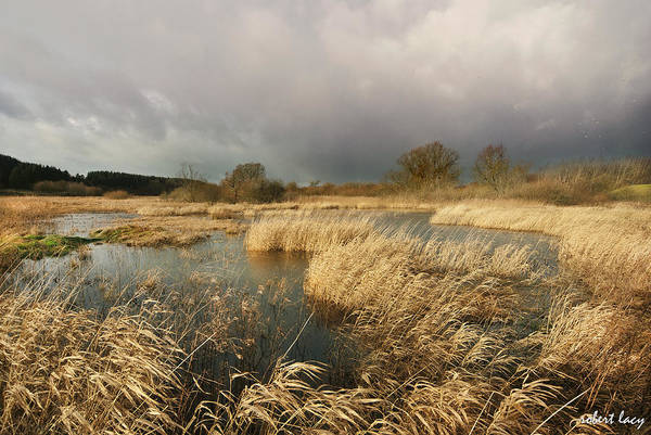 Swampland Print featuring the photograph Swampland by Robert Lacy