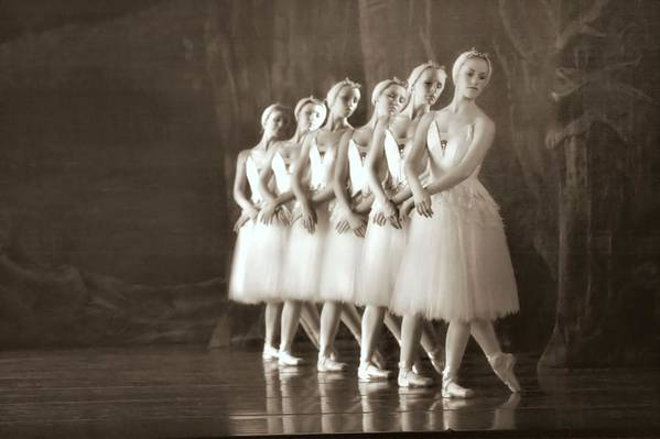 Ballet Print featuring the photograph Swans Lined Up by Kenneth Mucke