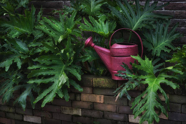 Hattiesburg Print featuring the photograph The Watering Can by Brenda Bryant