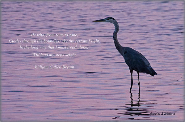 Quotes Print featuring the photograph Treading Alone  Great Blue Heron by Jonathan Whichard