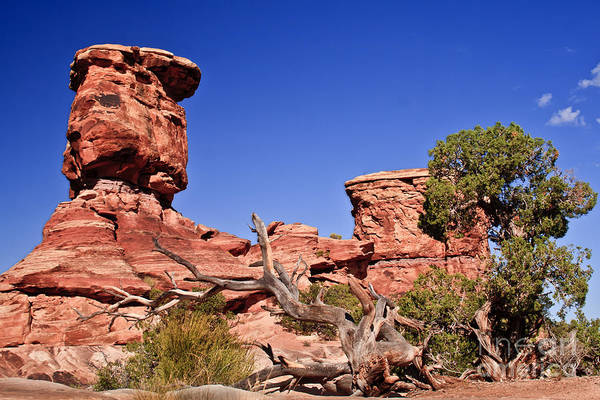 Panoramic Print featuring the photograph Watching by Robert Bales